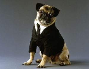 perro men in black